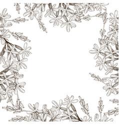 frame wild herbal flowers hand drawn vector image