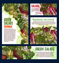 salad leaf and vegetable greens banners vector image