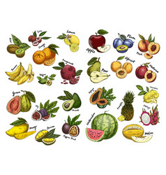 Sketches of fruit food agriculture theme vector