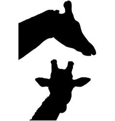 giraffe silhouette head and neck vector image