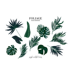 greenery plant set exotic tropical leaves vector image