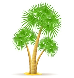 Palm tree 13 vector