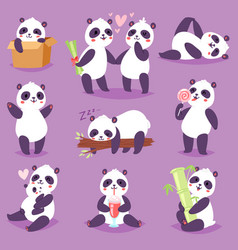 panda bearcat or chinese bear with bamboo vector image