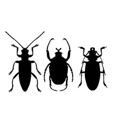 silhouettes of beetles - icons of insects outline vector image