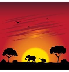 Sunset on a savanna vector image