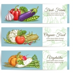 Vegetables banners Farm fresh organic products vector