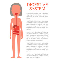 Digestive female system color vector