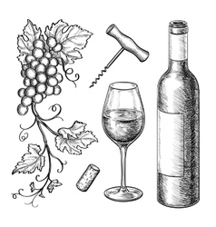 Grape branches bottle glass of wine vector