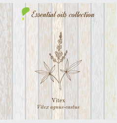 pure essential oil collection vitex wooden vector image
