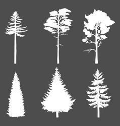 set white silhouette coniferous tree on dark vector image