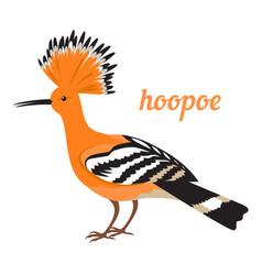 hoopoe vector image vector image