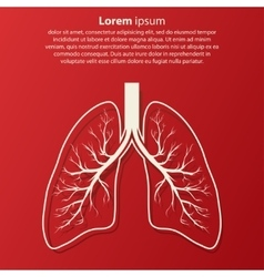 Human Lung anatomy vector image vector image