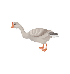 Goose standing isolated on white background side vector