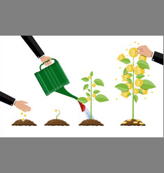 growing money tree stages of growing vector image