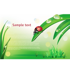 Natural background with ladybird vector