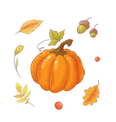 set in style hand drawing pumpkin autumn vector image