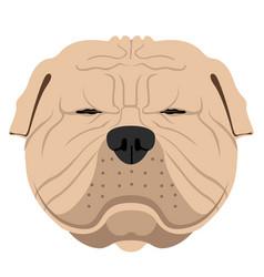 shar pei avatar vector image