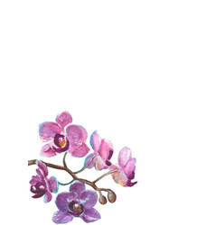 Watercolor orchid branch on white background vector
