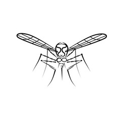 an insect mosquito vector image
