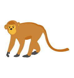 animal zoo monkey vector image