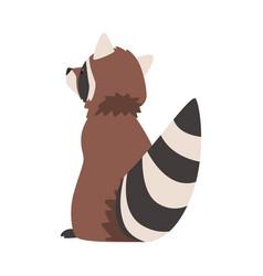 Cute raccoon adorable wild forest animal cartoon vector