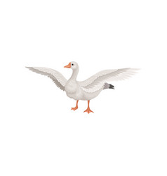 farm goose standing with wide open wings bird vector image