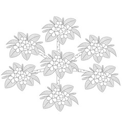 outline of plumeria flower tree top view draw on vector image
