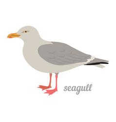 Seagull vector