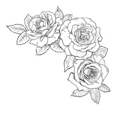 black and white bouquet roses decorative hand vector image