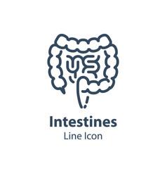 Human internal organ intestines and colon vector