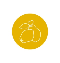 Icon Quince in the Contours vector