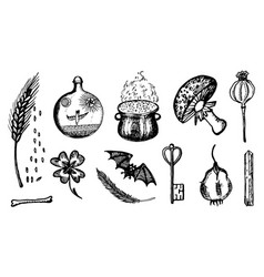 ingredients for witchcraft set in vintage style vector image