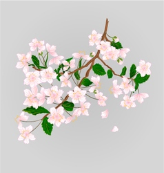 Wild Cherry branch natural background vector image
