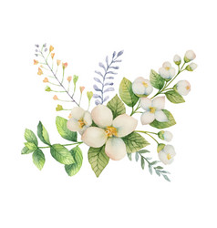 watercolor bouquet of jasmine and mint vector image vector image