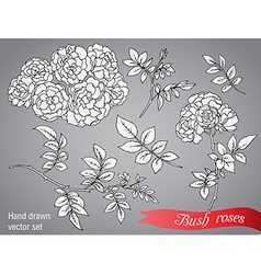 collection of hand drawn bush roses vector image