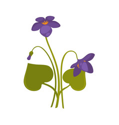 violets bunch isolated on white close up vector image