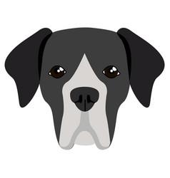 Great dane avatar vector
