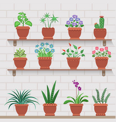 indoor plants on shelves attached to brick wall vector image