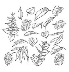 hand drawn elegant leaves vector image