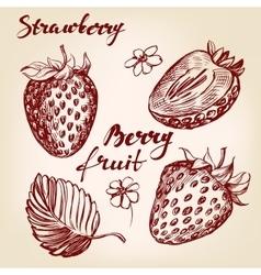 Strawberry set hand drawn vector image