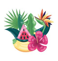 banana watermelon tropical fruits foliage exotic vector image