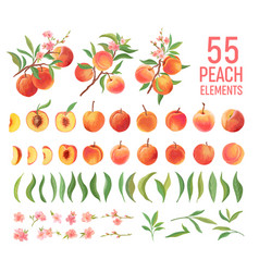 Peach fruit watercolor element set isolated vector