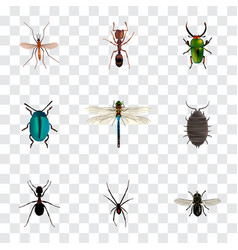 Realistic emmet gnat damselfly and other vector