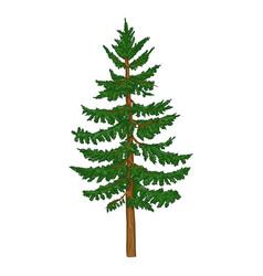 Single cartoon spruce evergreen conifer tree vector