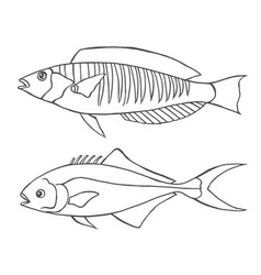 sketch line art fishes vector image