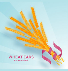 cartoon background with wheat ears and ribbons vector image