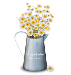 chamomile flowers in a pot vase spring vector image