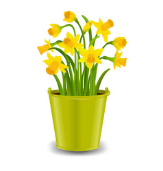 narcissus in pot vector image vector image