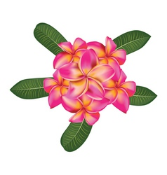 Plumeria with leaves vector image vector image