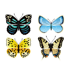 butterflies types set icons vector image